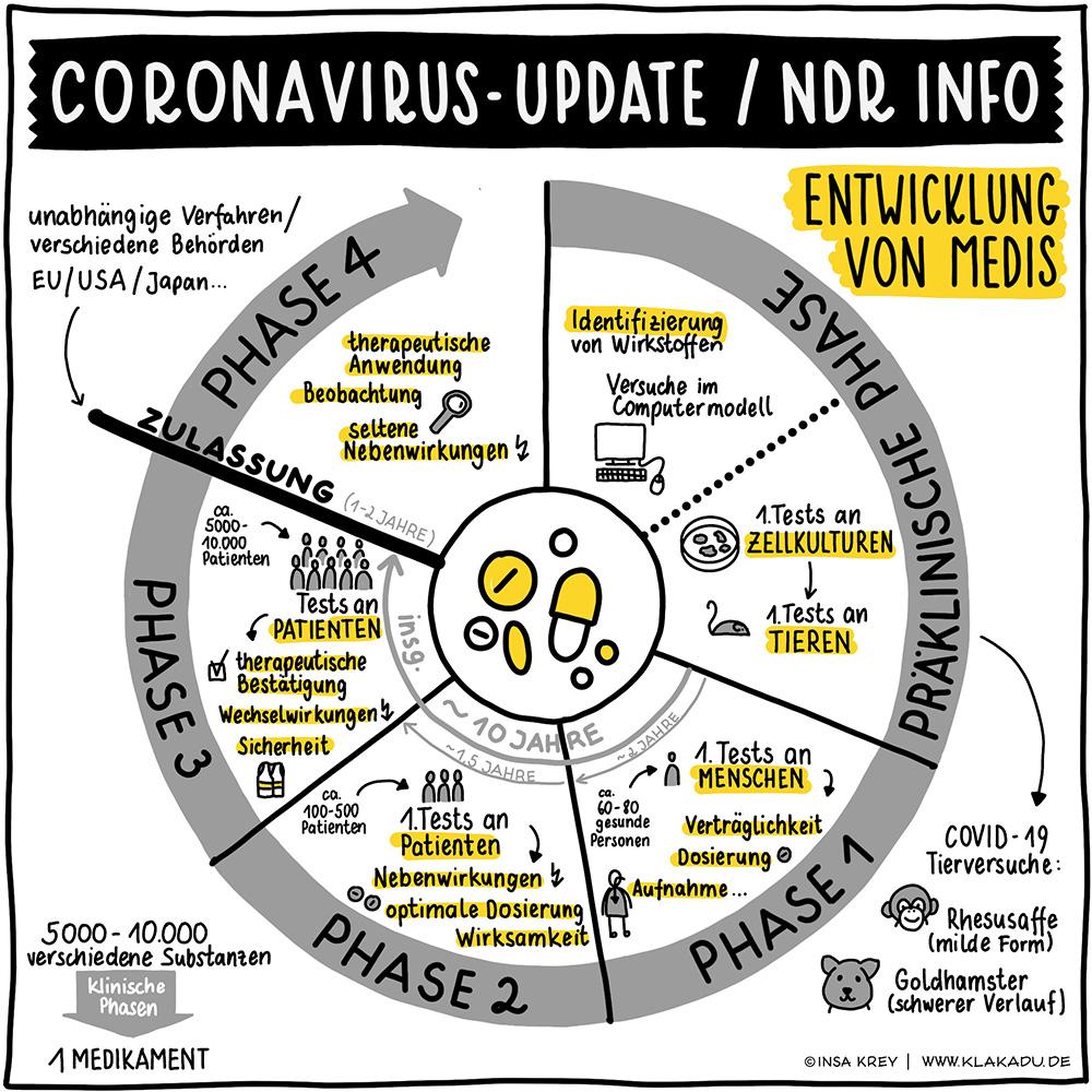 Infografik über die verschiedenen Phasen der Entwicklung von Medikamenten